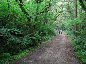 Things to do in Donegal: Ards Forest Park